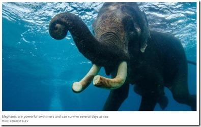 Snorkeling - elephant