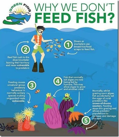 Why We Dont Feed the Fish