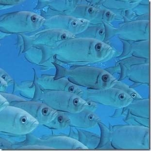 Fish school - Bigeye
