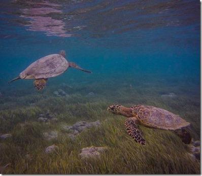 Kuredu - snorkel day