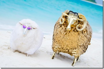 Finolhu - sheep on a beach