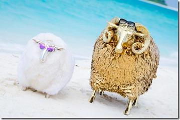 Finolhu - sheep on a beach