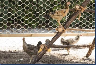 Six Senses Laamu - chicken spa