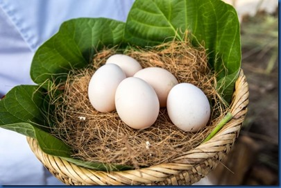 Six Senses Laamu - organic eggs
