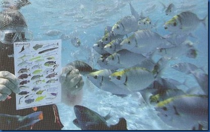 Underwater - activity - fish school