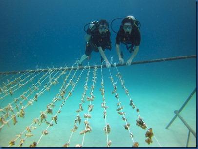 Summer Island - rope reefs