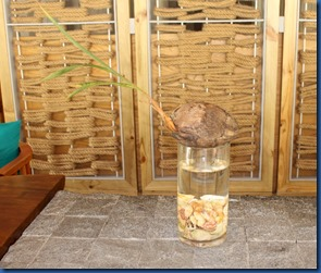Faarufushi - coconut vase 1