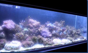 LUX North Male Atoll - aquarium