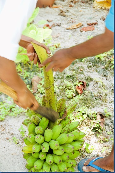 Amilla - foraging lunch 3