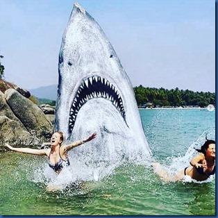 Havent Seen - shark rock