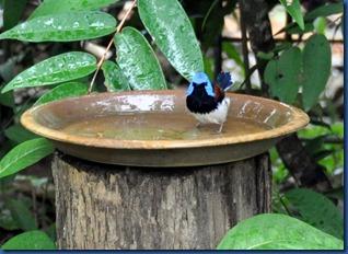 Havent Seen - bird bath